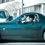 Ante una retención de tráfico, ¿quién se estresa más, la mujer o el hombre?