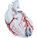 ¿Es seguro conducir después de un infarto?
