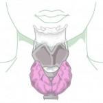 Problemas de tiroides y su influencia en la seguridad vial
